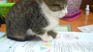 Вот так мы выполняем домашние задания)))