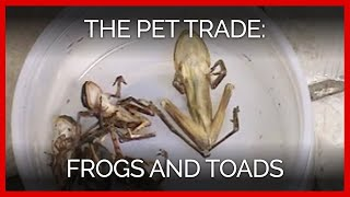 The Pet Trade: Frogs and Toads