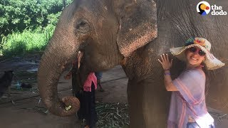 The Scary Truth About Elephant Rides  | The Dodo