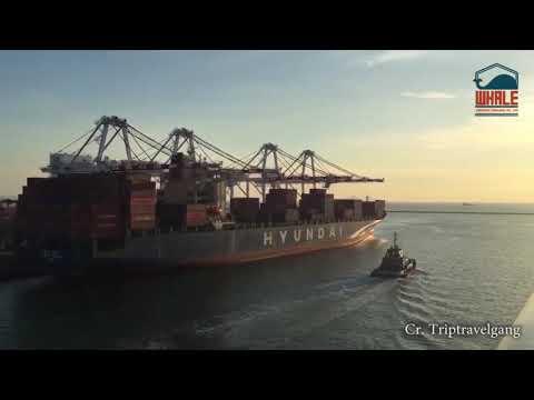 WhaleGroupThailand  Freight forwarder