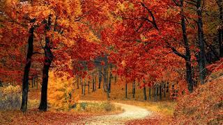 Las Cuatro Estaciones (Four Seasons) - Vivaldi