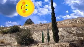 Одинокий кипарис