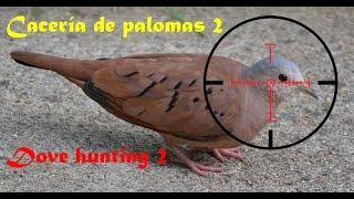 Cacería de palomas 2 - Dove hunting 2 - PCP Benjamin Maximus 177.