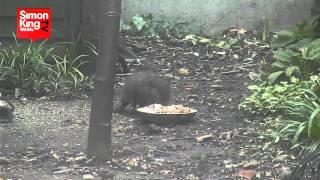 Fox Feeding