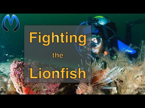 Hunting Lionfish in Pensacola, Florida