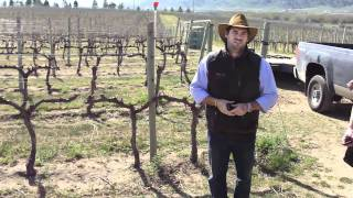 Adding Compost & Drip Irrigation To Vineyards In The Black Sage Bench
