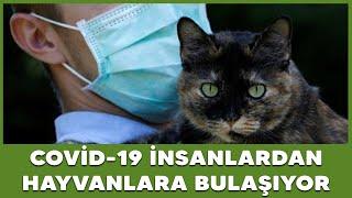 DSÖ Açıkladı! Covid-19 Insanlardan Hayvanlara Bulaşıyor
