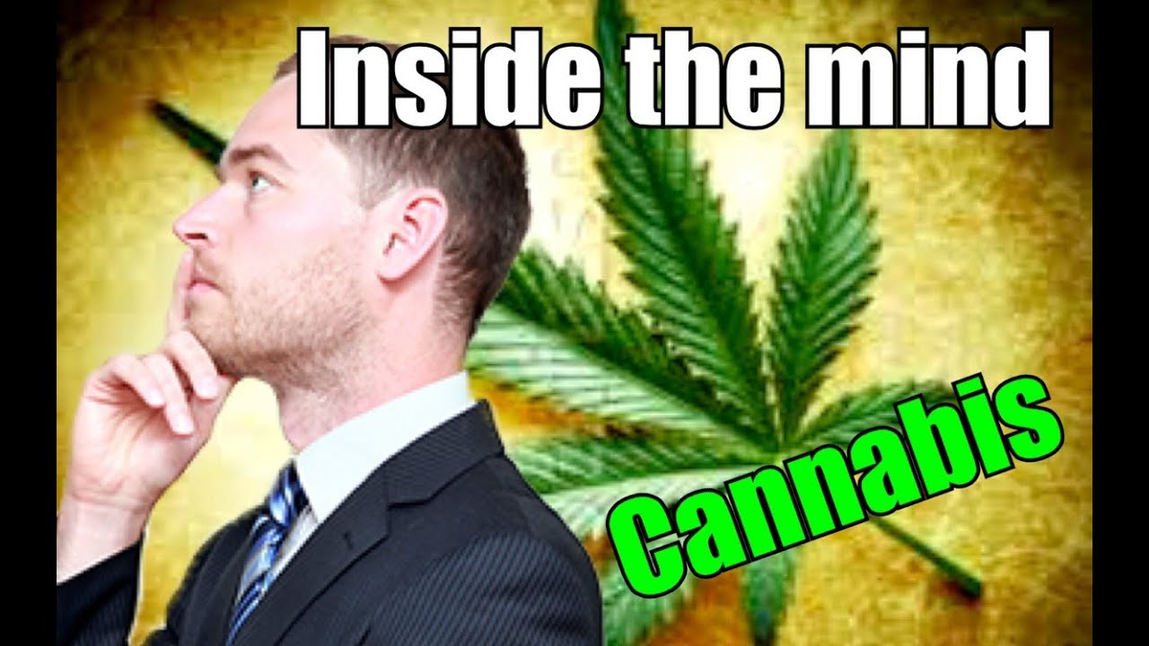 cannabis keeps the mind balanced This is mind blowing did you know that studies showed the effectiveness of cannabis at killing cancer cells as long ago as 1974 in 1974, a study from the washington post said that thc effectively slowed the growth of lung cancers, breast cancers and a virus-induced leukemia in laboratory mice.