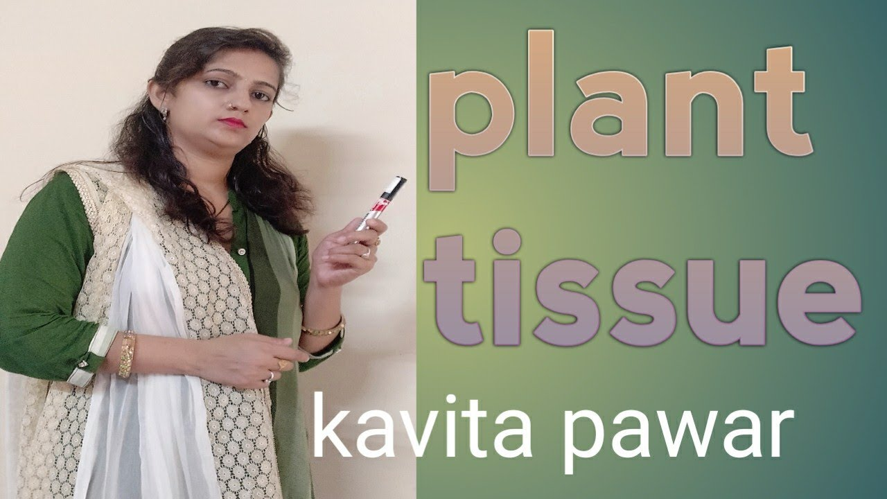 Plant Tissue , class -9th, Ncert - YouTube