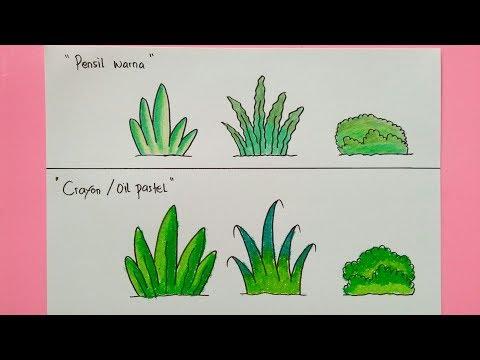 Cara Menggambar Dan Mewarnai Tanaman Rumput Gradasi Pensil