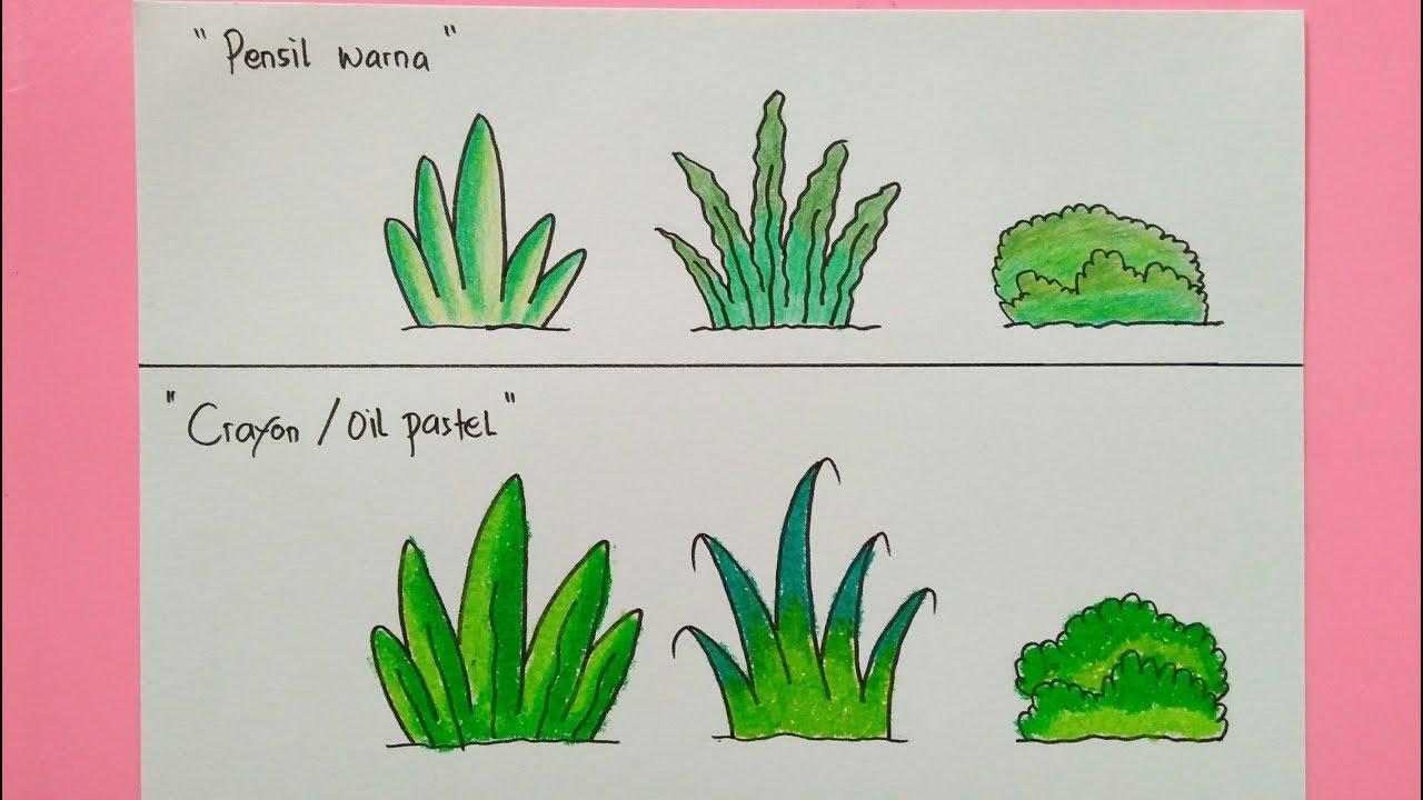 Cara Menggambar Dan Mewarnai Tanaman Rumput Gradasi Pensil Warna Dan Crayon Oil Pastel
