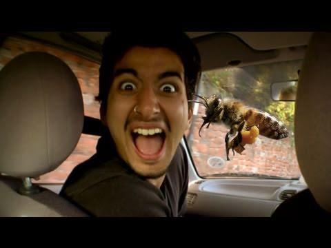 Riding in Cars with Bees