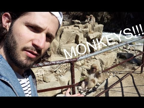 Snow Monkey Park in Japan (special guided tour edition)