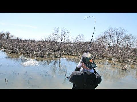 Sight Fishing Big Bass on Lake Fork