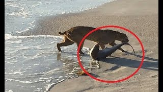 Most DANGEROUS Animals On Earth