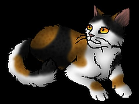 Top Ten Prettiest Warrior Cat Name Prefixes