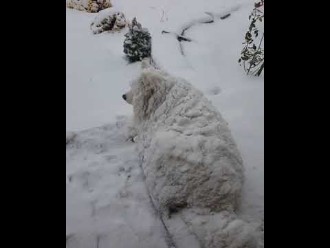 Alabama's Morning News with JT - This Dog Loves Snow More than We Ever Could