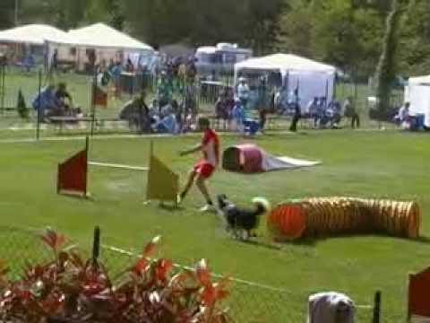 Agility dog 3 brevetto gara Perugia 25/4/2009 Roberto Mucelli ed Aragorn 3° classificato agility