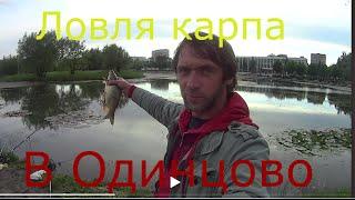 Ловля карпа в Одинцово на баранке Catch carp in Odintsovo on the steering wheel