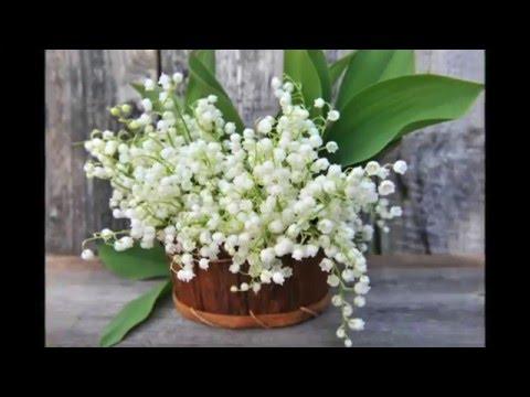 Ароматные цветы ландыши на приусадебном участке