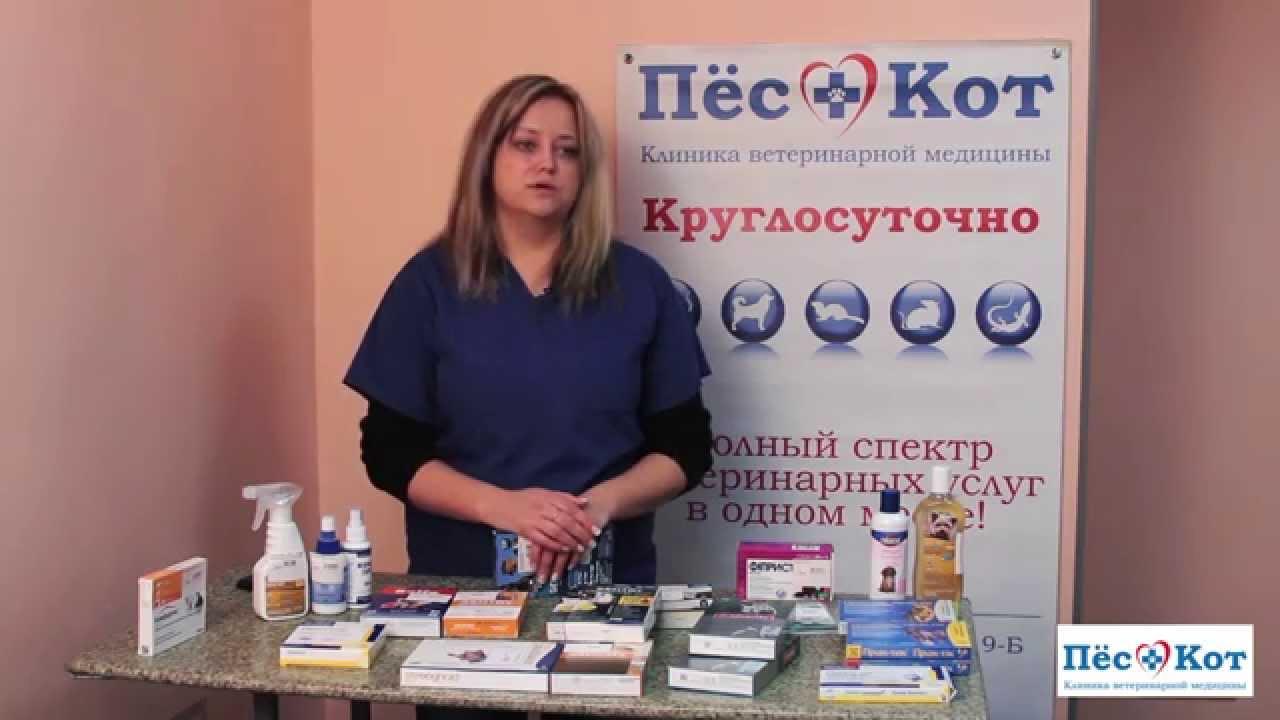 Препараты от блох и клещей - капли, спреи, ошейники, шампуни, таблетки. Что эффективней?