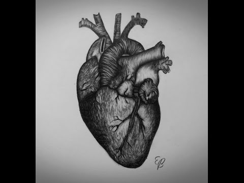 how-to-draw-heart-step-by-step-real-heart-drawing