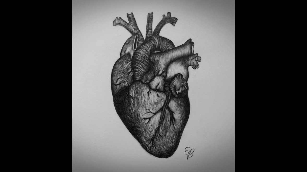 Heart Drawings: How To Draw Heart Step By Step Real Heart Drawing