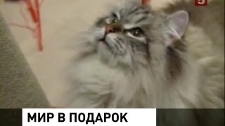 プーチンのネコが秋田県知事の手に ロシアTV thumbnail