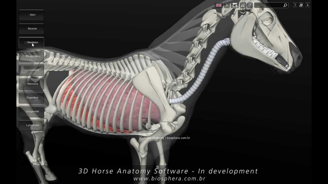 3D Horse Anatomy Software - In development