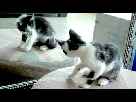 1 Mirror, 2 Cats