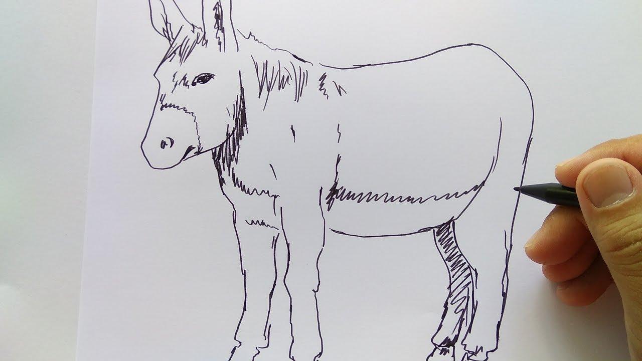 Cara Menggambar Keledai