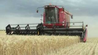 case ih 2366 and macdon 2052 wheat harvest 2009