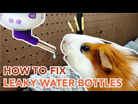 How To Maintain And Prevent Leaks In Guinea Pig Water Bottles | GuineaDad