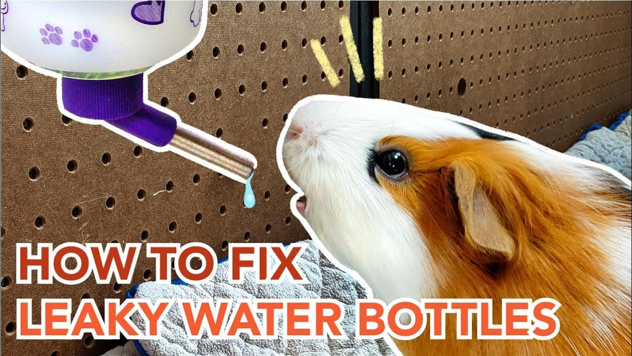 How To Maintain And Prevent Leaks In Guinea Pig Water Bottles