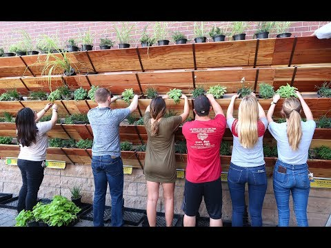 Growing 180 Sq Ft of Raised Bed Garden on a Wall or House | 8 Foot Tall Vertical Garden