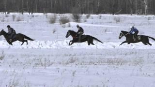 Скачки чкв 2 Шушенское 2016 (Horse–Animal-racing-конь-смотреть-онлайн-бега)