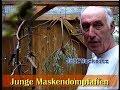 Maskendompfaff Zucht Bei Rolf Wacknitz Schwarzzeisig Schwarzbrustzeisig Und Yarellzeisig  Tembakan(.mp3 .mp4) Mp3 - Mp4 Download
