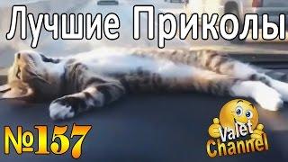 ПРИКОЛЫ-ВИДЕО  | Лучшая подборка приколов - Funny Videos