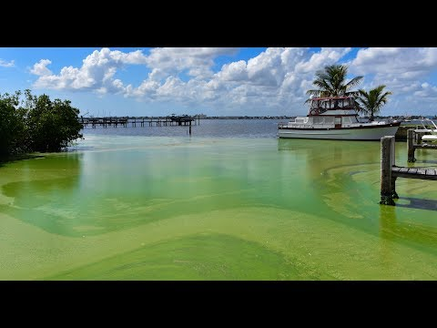 Toxic Algae: Complex Sources and Solutions - Full Episode