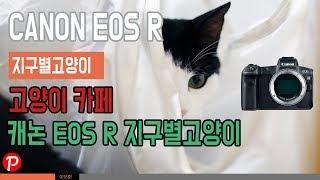 캐논 EOS R 고양이…