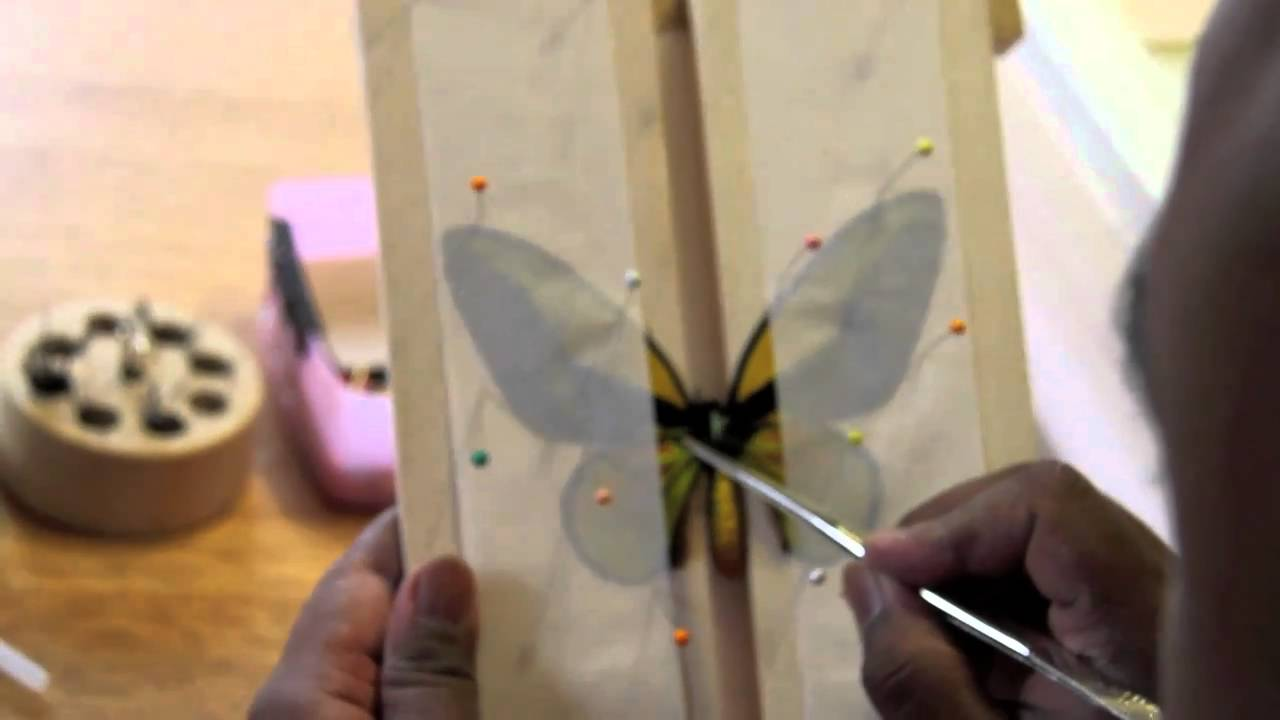 How To Pin a Butterfly.mov - YouTube