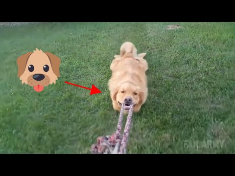 TRY NOT TO LAUGH At Funny Dog Video Compilation 2019 – Dog Fail 2019 🐶