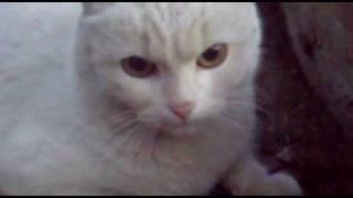 Кошка хочет СЕКСА-РЖАЧ!!