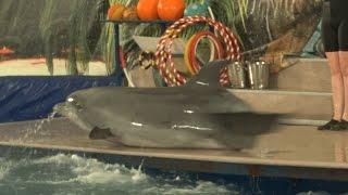 ШОУ КУБИНСКИХ ДЕЛЬФИНОВ В ТВЕРИ(https://youtu.be/7DZw8y4Qo_8 Твери начал работать дельфинарий, который развернут у ТЦ