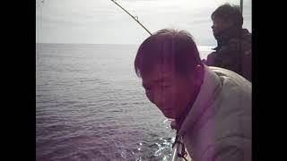 동해 대구낚시 조황