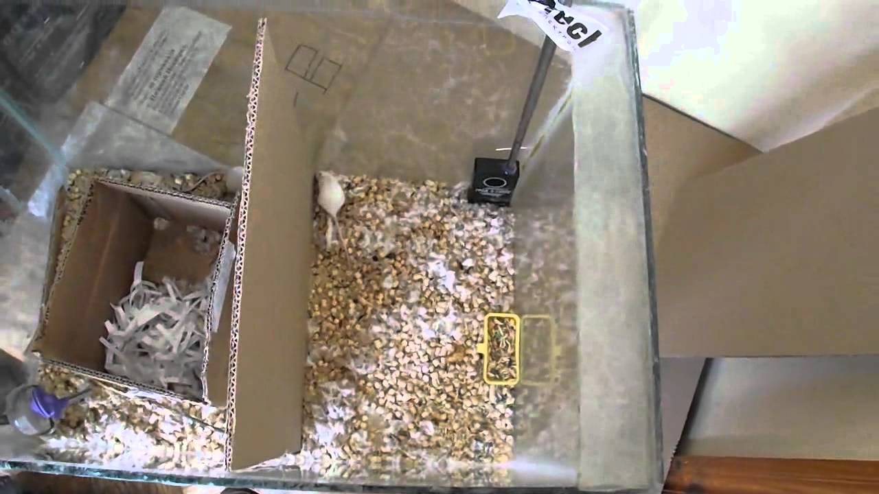 схема утразвукового отпугивателя мышей