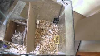 видео Отпугиватель от мышей
