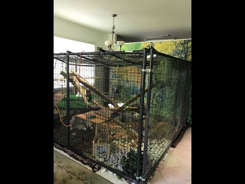 LARGEST INDOOR IGUANA CAGE ON THE INTERNET