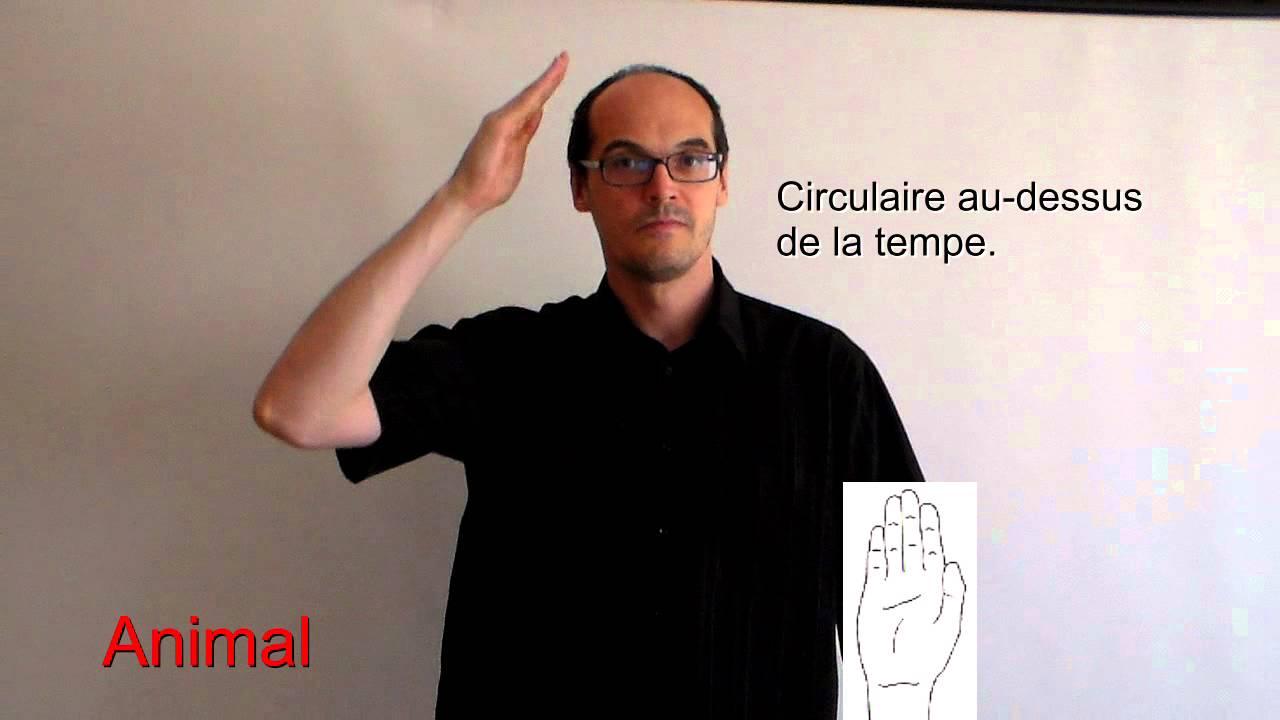 Animal en langue des signes française - YouTube