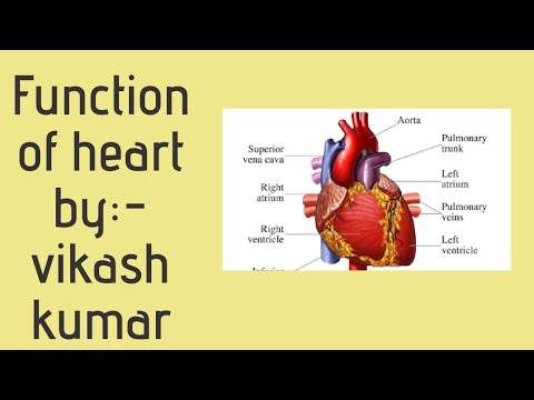 Human Heart and it's function part 1